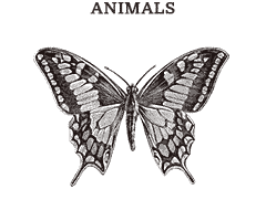 Illustrations in the category Animals