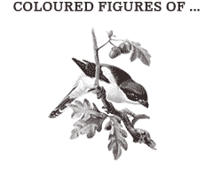 Illustrations from Coloured figures of the birds of the British islands