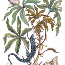 Cassava, butterfly, and lizard