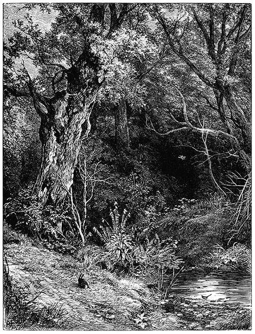 A place in the woods by the bank of a brook with an old oak tree