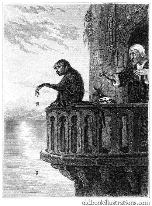 The miser and the monkey