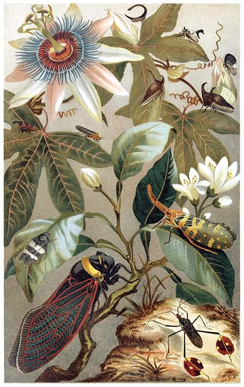 Cicadas (2)