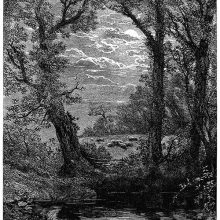 View of a pond or river at night with trees lining the bank