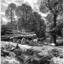 A wood wain is in a clearing with its load of tree-trunks and seems to be getting ready to go