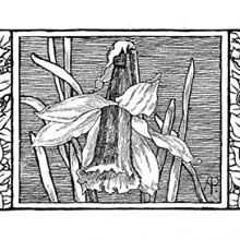 Headpiece showing a daffodil flanked by a skull on each side