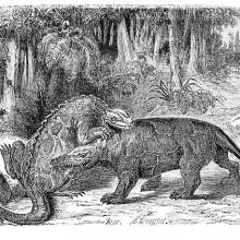 An iguanodon and a megalosaurus are fighting in the Early Cretaceous period