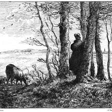 A man stands in a small clump of trees, looking at the horizon beyond the fields