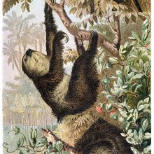 A two-toed sloth climbs a branch as a parrot is perched above it