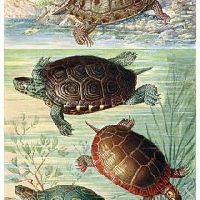 Four turtles can be seen as though through the glass of an aquarium