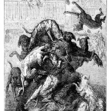 A bear is fighting a pack of dogs with the strength born of despair in an arena