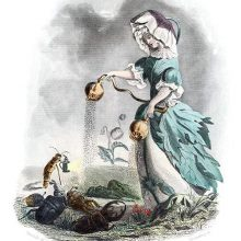 An opium poppy is depicted as a woman sprinkling poppy seeds from seedpods over insects