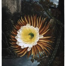 View of blooming Selenicereus Grandiflorus on a river bank by a moonlit night