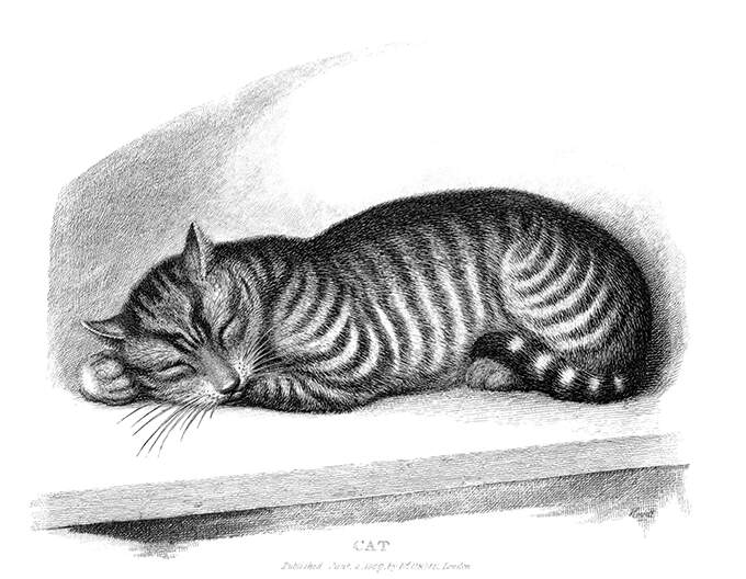 A tabby cat is fast asleep on a ledge