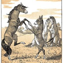 A mare and a donkey are dancing together in a pasture standing on their hind legs