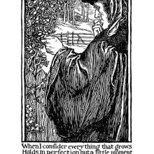 A man in fifteenth-century costume looks thoughtfully at a rosebush