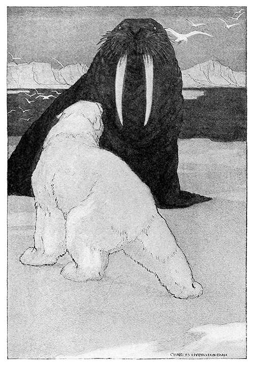 A walrus and a polar bear face each other on an ice field while assuming bellicose postures