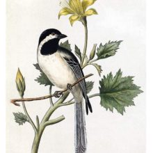 A black-capped chickadee is perched on a twig with a yellow-flowering plant in the background