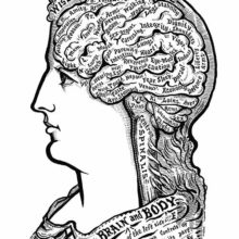 A woman's head is seen from the side with the brain made visible and its folds labeled