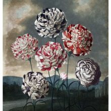 View of six varieties of carnations near a riverbank