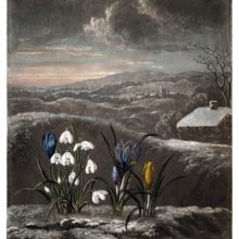 View of a wintry countryside landscape with snowdrops and blue and yellow crocuses in the foreground
