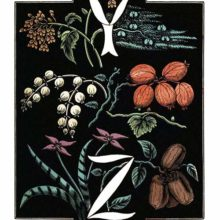 The letters Y and Z are drawn in white over a background of plants and fruit