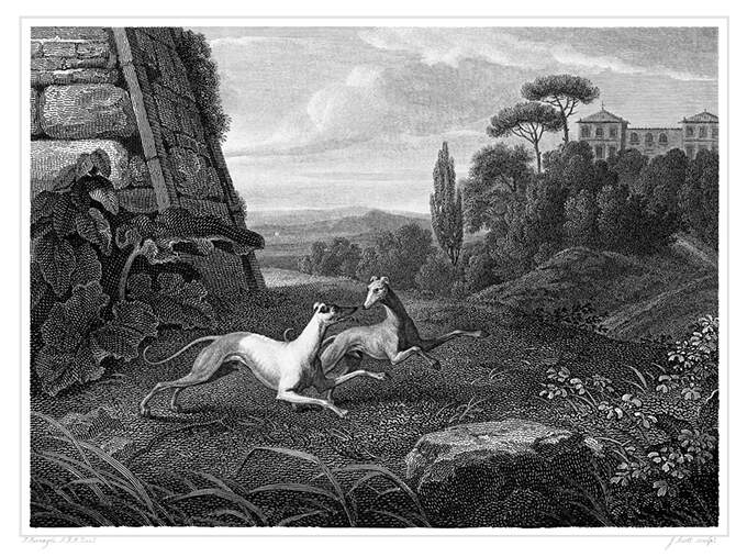 Two Italian greyhounds are frolicking in the park of a villa which can be seen in the background