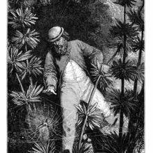 A man in a tropical forest happens upon a small bird caught in the web of a large spider