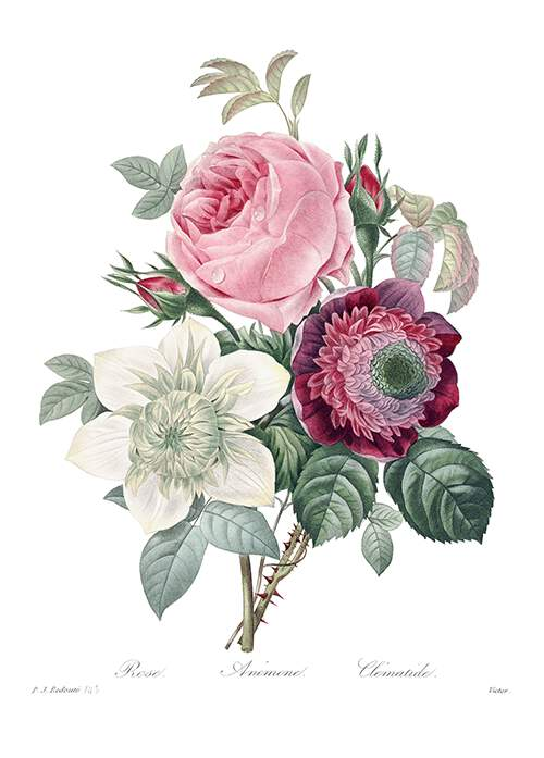 Bunch of flowers consisting of a pink rose, a white anemone, and a purple clematis