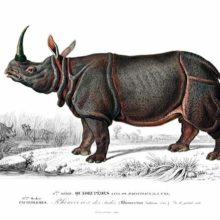 An Indian rhinoceros is seen from the side near a pond in a savanna-like landscape