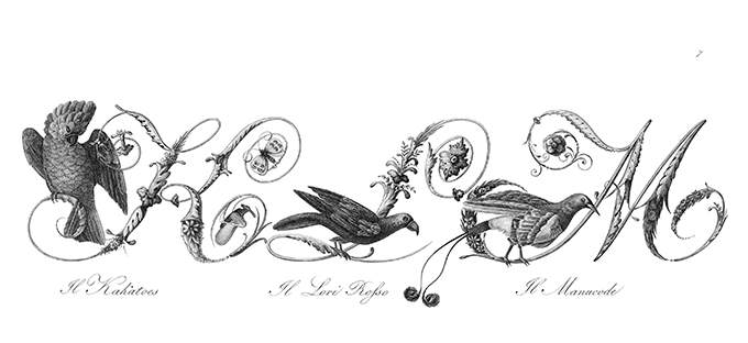 Plate showing ornamental capital letters K, L, and M embellished with pictures of birds