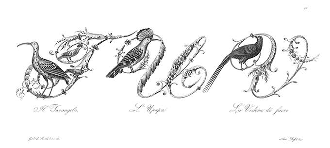 Plate showing ornamental capital letters T, U, and V embellished with pictures of birds